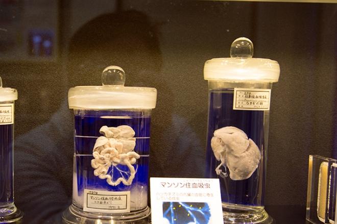 parasite-museum