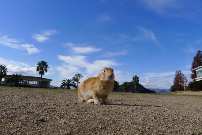 rabbit-island