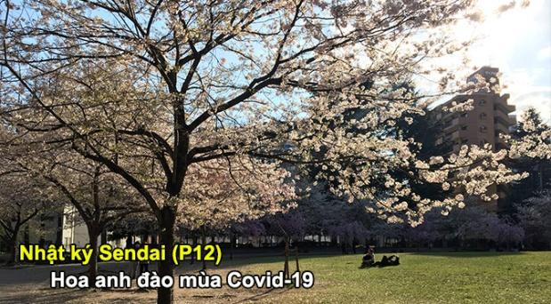 Nhật ký Sendai (P12): Hoa anh đào mùaCovid-19